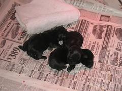 Sadie's New Puppies!