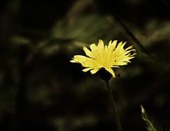 The hidden beauty (Rodrigo.Wen) Tags: china travel viaje vacation naturaleza flower color colour nature canon flor vacacin vosplusbellesphotos