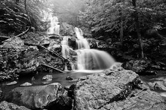 Dark Hollow Falls - B&W (Armughan-) Tags: longexposure water landscape waterfall nikon day weekend shenandoah 2009 bigmeadows waterscape 1735mm shenandoahnationalpark darkhollowfalls d700 afsnikkor1735mmf28 hoyahdcircularpolarizer nikond700shenandoahmemorialdayweekend2009 nikond700shenandoahmemorial