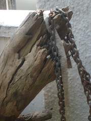 Old tree bark and chains (Apiii) Tags: old nature lines bark artinnature rottentree rustedchians