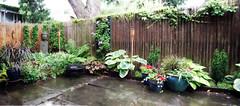 My Garden (Chicago_Tim) Tags: panorama ny newyork fence garden courtyard patio albany slate bluestone