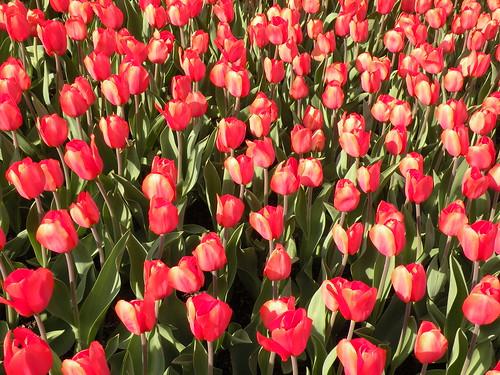 Visit: Longwood Gardens blog image 1
