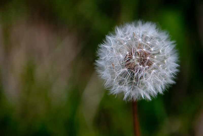 IMAGE: http://farm4.static.flickr.com/3399/4615992598_500f5bbd26_o.jpg