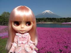 Shibazakura Lake beholds Mt Fuji