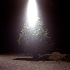 (buttha) Tags: light tree 120 6x6 night analog mediumformat streetlamp albero notte luce lampione yashicamat124g analogico medioformato fujifilmpro400h canoncanoscan8800f authorsclub gossensixtomatdigital