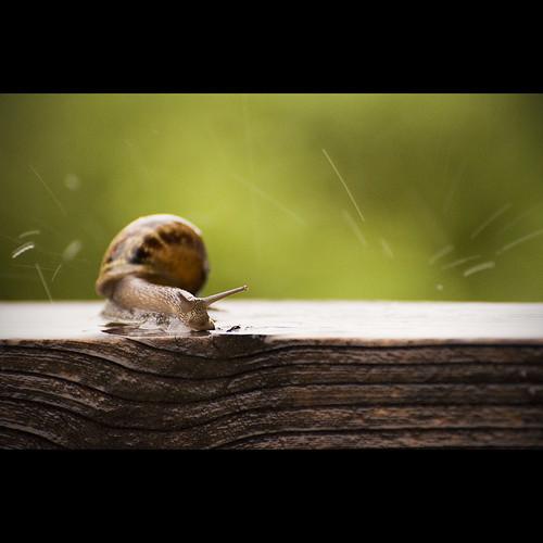 Slugging in the Rain