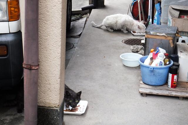 Today's Cat@2011-06-02