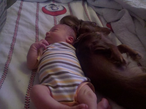 Darius's 1st Snuggles with Sakura