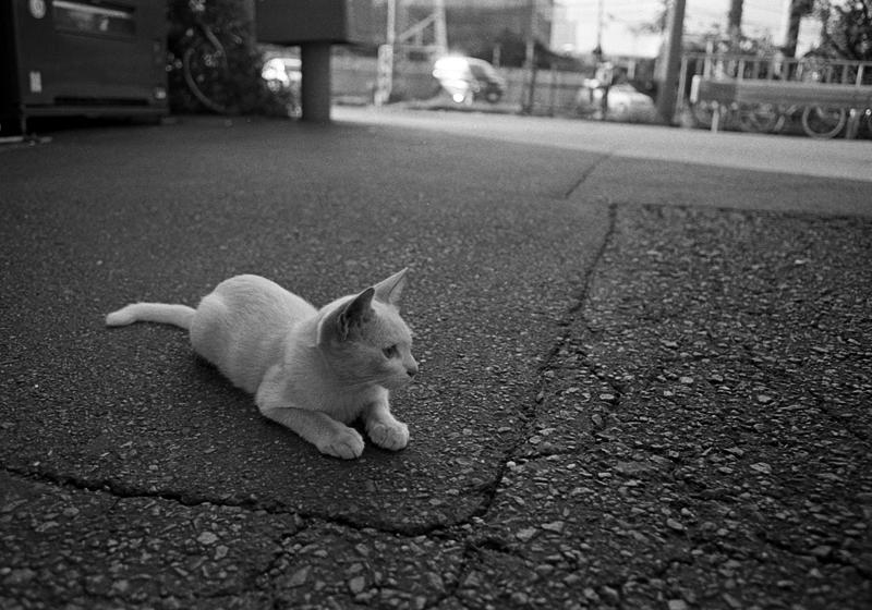 工業地帯の白猫