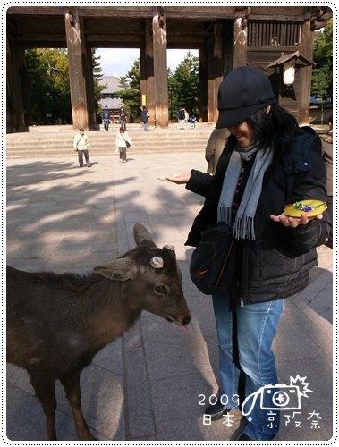 奈良的鹿 (1)