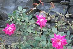 flowers (courtneysmilestoo) Tags: flowers nashville