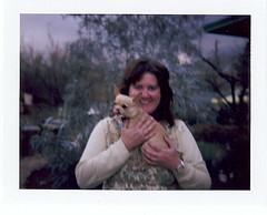 licking his chops (EllenJo) Tags: chihuahua home me yard polaroid blurry outoffocus fujifilm floyd landcamera fridayafternoon instantfilm vintagepolaroid lickinghischops colorpack2 someoneelsetookthisphoto ellenjo vintaagecamera