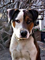 Firpo (Myrkha) Tags: mexico perro zacatecas mascota jerez anawesomeshot quarzoespecial oneofmypics platinumbestshot platinumpeaceaward