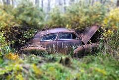 10-19-08 045 TS (c.updegrave) Tags: abandoned oregon moss rust decay junkyard tiltshift wreckingyard d80 1949pontiac abandonedoregon oldrustycars tiltshiftmaker