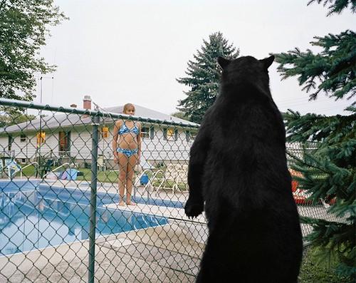 Amy Stein Bear w swimming pool