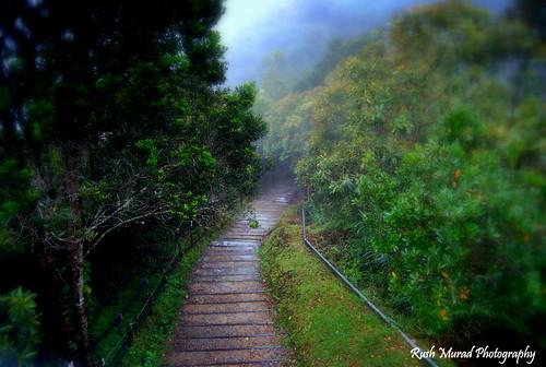 Kinabalu Park's trail
