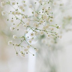 T H E . W I L L . A N D . T H E . W I S H (Miss K.B.) Tags: light white flower colour macro nature flora soft bokeh quote naturallight simplicity nikkor delicate blooming bokehlicious nikond80 babysbreath