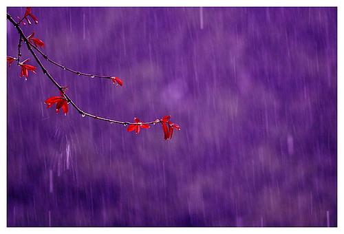 IMG_1476-w purple