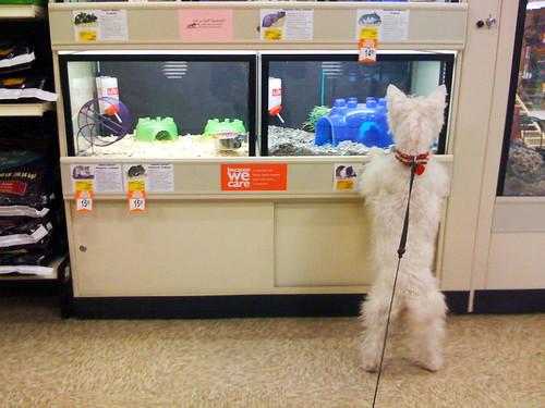 Cleo PetSmart 02