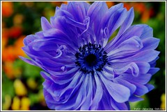 **Lilac** ( Photography Janaina Oshiro ) Tags: naturaleza flower macro primavera nature digital natureza flor japo lils abigfave nikond80
