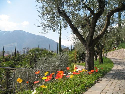 Flanieren im Olivenhain
