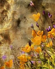 Spring Poppies (highsierramedia) Tags: flower art outdoors spring state grunge poppy poppies flowerotica fantasticflower proudshopper scenicsnotjustlandscapes awardtree mmmilikeit california140californiaflowerhighwayhillsmountainsoakhurstoutdoorspoppiespoppyspringstate