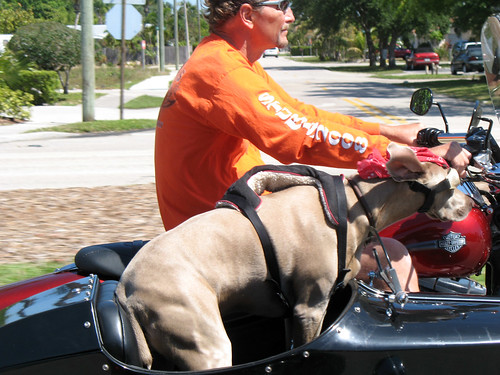 Dog_sideCar_2