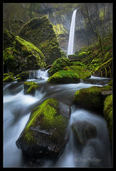 Vertical Mossy Elowah#2 (Chip Phillips) Tags: green vertical oregon river landscape photography waterfall moss spring phillips columbia falls chip gorge mossy elowah ostrellina alemdagqualityonlyclub