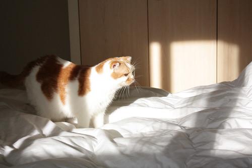 別擋我太陽