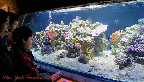 Coral and Fish Tank
