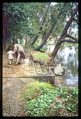 Pond Life - IN 1987 Carousel2-024 (Eric.Parker) Tags: india pond tisha 1987 kolkata bengal calcutta westbengal piya bardi jadhavpur