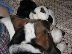 Bacon/Panda Cuddling