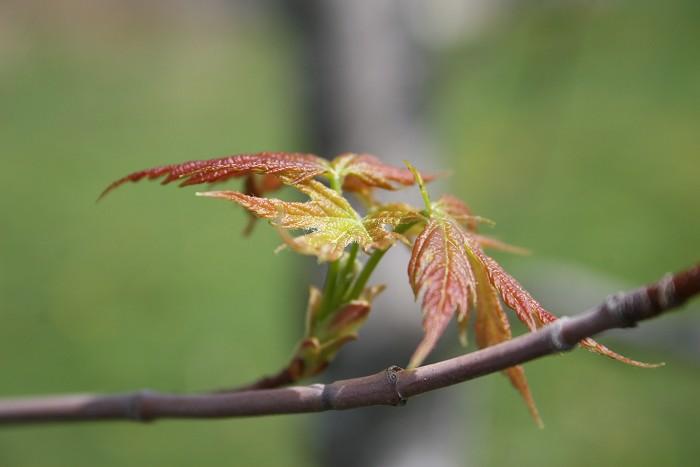 04-28-leaf2
