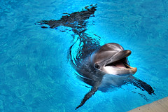 Smiling Dolphin at Mirage Hotel in Las Vegas (jhandelman) Tags: las vegas smile smiling canon eos dolphin mark secret ii 5d mirage graden aplusphoto