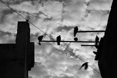 you/me (Stefano Libertini Protopapa) Tags: light sky bw white black home birds flight bn uccelli volo bologna hitchcock lecce stefano youme stefo intheend flymeaway bloccato tuio libertini protopapa wannaseeyouagain voime stefanolibertiniprotopapa gonnatellyouwhatimfeeling gonnagetitbackthatfeeling thelittlethingsthatyoudo weallbearthescarsyeahweallfeignalaughweallcryinthedarkgetcutoffbeforewestart hitchcockuccelli