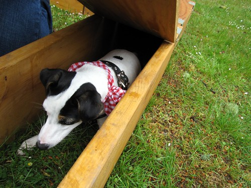 JRT Fun Day - Lucy go to ground