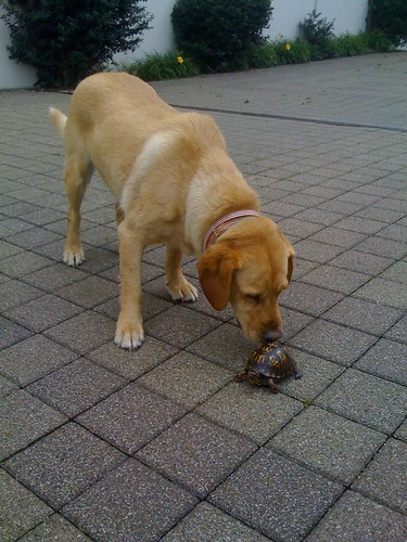 Dog Investigates Turtle