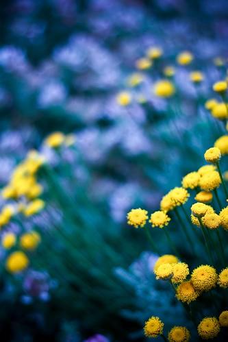 Spritely Yellow Creatures