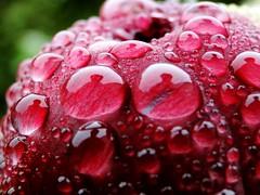 [Explore] Ich + Ich (Froschknig Photos) Tags: pink macro water drops wasser echo rosa h2o makro tropfen pfingstrose froschknig michau ichich ichundich vanagram sonydschx1 froschknigphotos