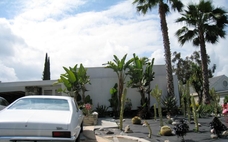 cactus+flamingo+front yard+LA