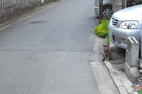 Today's Cat@2010-05-25