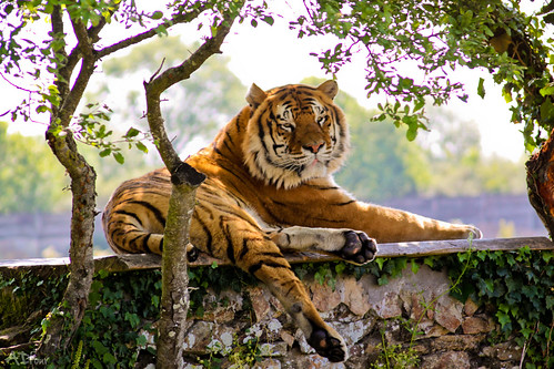 L'énergie du tigre par ADtour