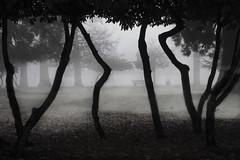 Fog (__KAREN__) Tags: park trees london fog bench sassy 2009