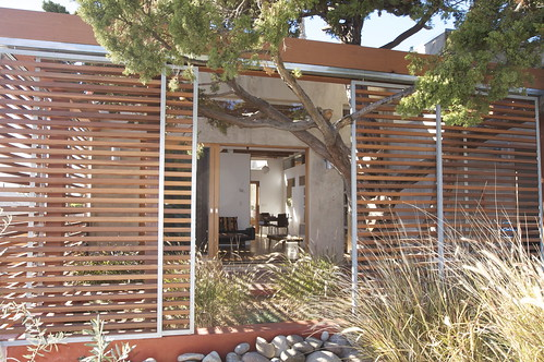 Tree Entangled with House,modern,house,design