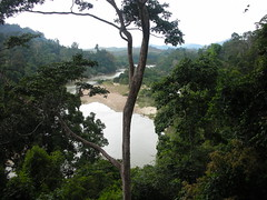 Taman Negara 06 (Ben Beiske) Tags: trees river jungle malaysia tamannegara malaisien