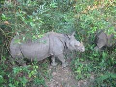 Nepal, neushoorns