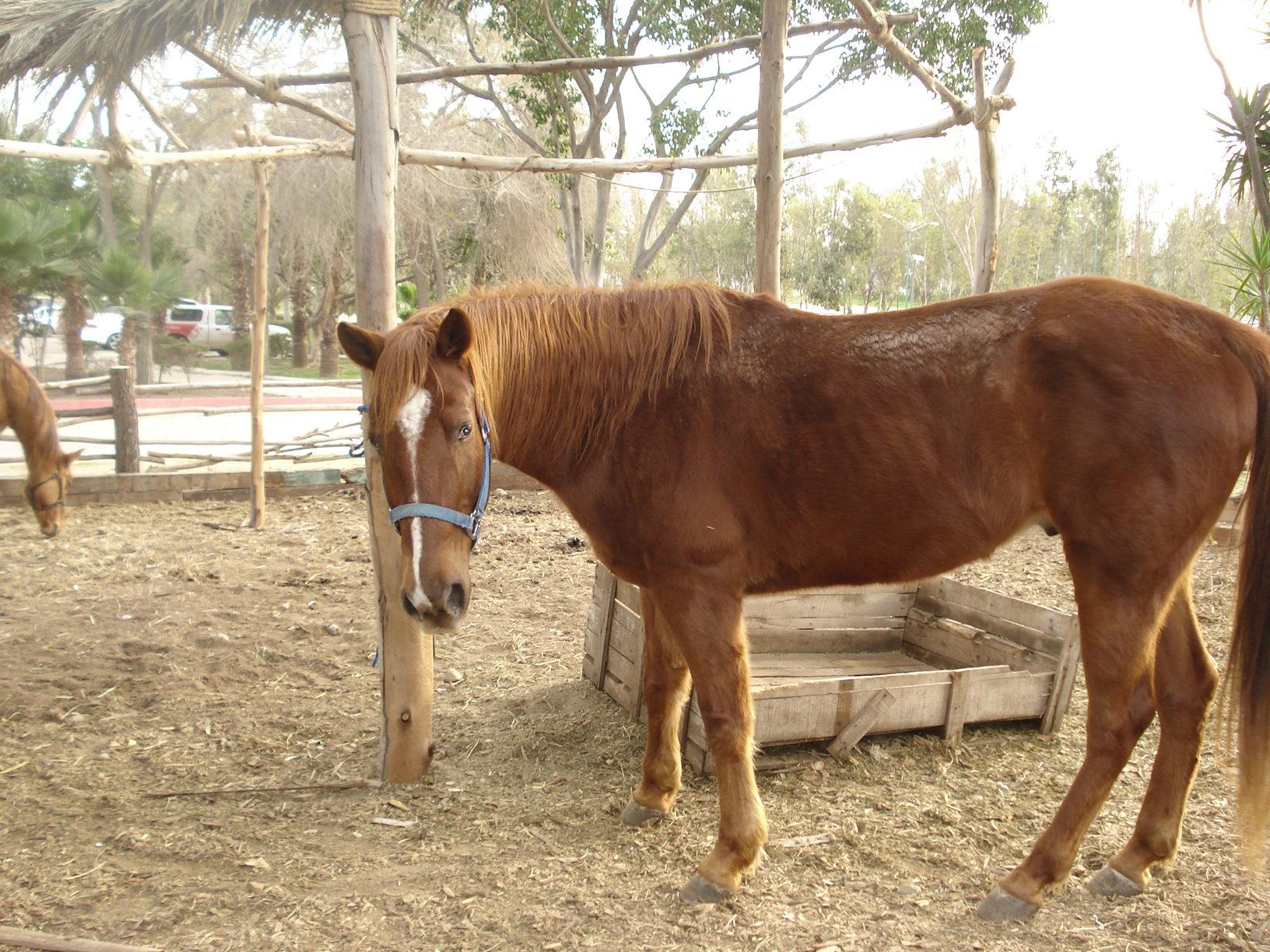 fotos penes caballos