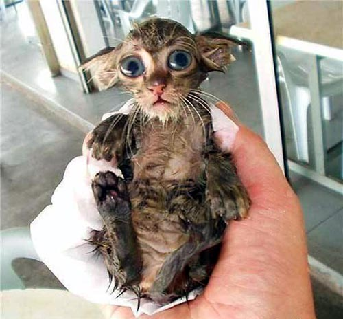 tiny wet kitten