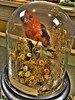 Scarlet Tanger (MightyBoyBrian) Tags: red orange bird glass museum scarlet dead angle wide indiana case 1022mm hdr tanger f35 laporte httpwwwlaportecountyhistoryorg laportecountyhistoricalsociety