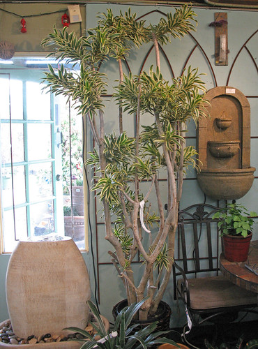 indoor plants and water fountains